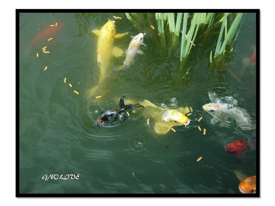 Fish Eating Beneath Water Fall