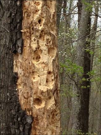 Wood Pecker has left