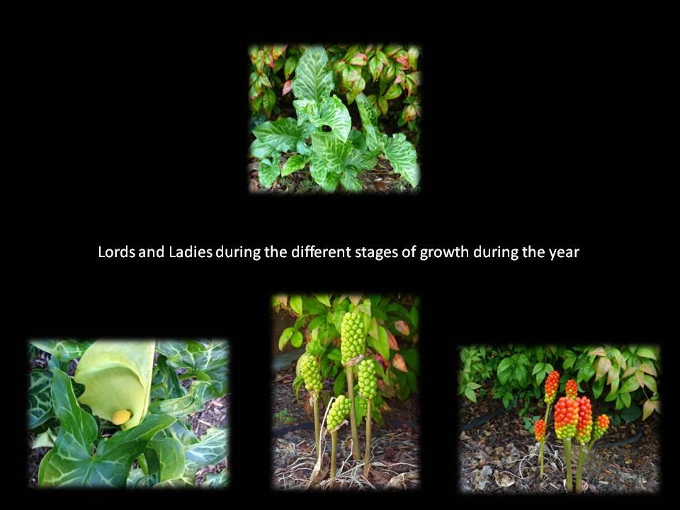 Lords of Ladies