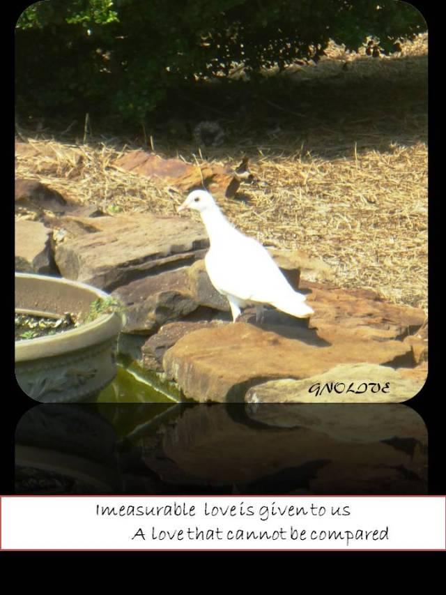 white-dove-poem